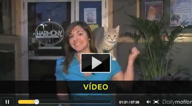 Animais que odeiam os repórteres - Vídeo Humor