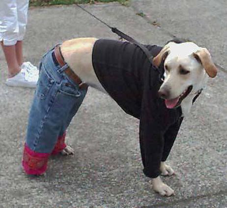 13 imagens insólitas de moda para cães