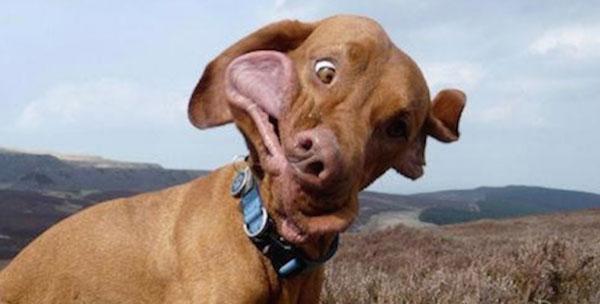12 imagens cómicas de cães